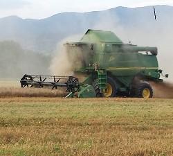 Mottura Società Agricola, Agricola Gorini - Civitella D'Agliano (VT) - La trebbiatura del grano 3
