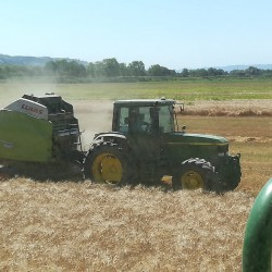 Mottura Società Agricola, Agricola Gorini - Civitella D'Agliano (VT) - Una bella giornata di raccolta